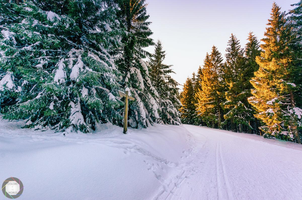 Harz 6