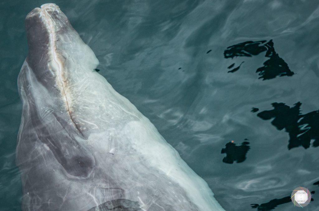 Neuseeland - Delfin Tour 1